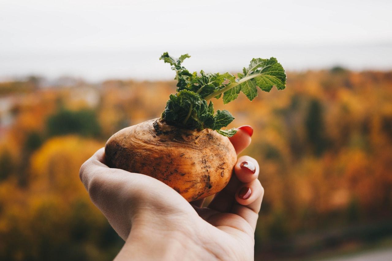 Zpracování brambor rychle a efektivně.